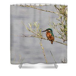 Kingfisher Waiting Shower Curtain