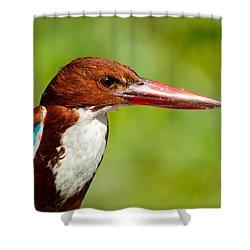 Kingfisher_portrait Shower Curtain