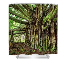Kipahulu Banyan Tree Shower Curtain by Inge Johnsson