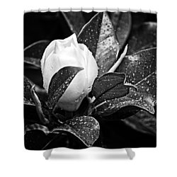 Shower Curtain featuring the photograph Kissed By Rain by Carolyn Marshall