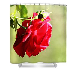 Kissed By The Sun Shower Curtain by Gabriella Weninger - David