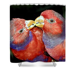 Kissing Birds Shower Curtain by David Lee Thompson