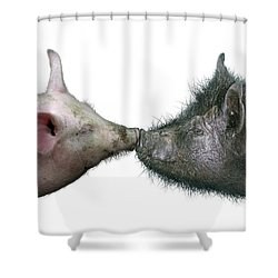 Kissing Pigs Shower Curtain