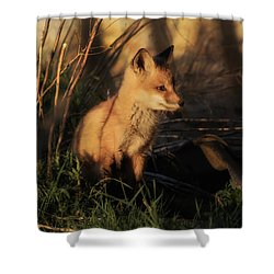 Kit Fox Sunset Shower Curtain