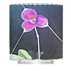 Kite Orchid Shower Curtain