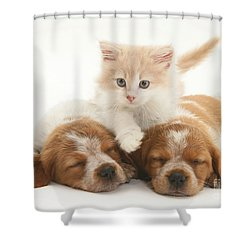 Kitten And Puppies Shower Curtain by Jane Burton