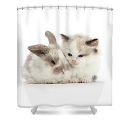 Kitten Cute Shower Curtain