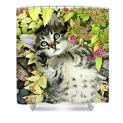 Kitten Dreams Shower Curtain