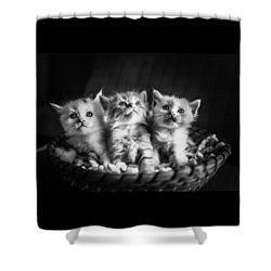 Kitten Trio Shower Curtain