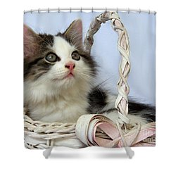Kitten In Basket Shower Curtain by Jai Johnson