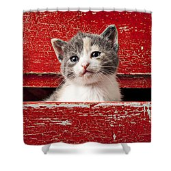 Kitten In Red Drawer Shower Curtain by Garry Gay