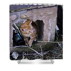Kitten In The Junk Yard Shower Curtain by Larry Capra