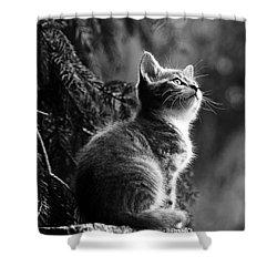 Kitten In The Tree Shower Curtain