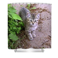 Kitten On The Patio Shower Curtain by Larry Capra
