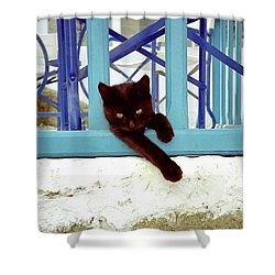 Kitten With Blue Rail Shower Curtain