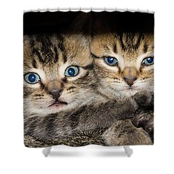 Kittens In The Shadow Shower Curtain