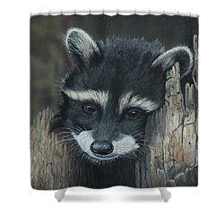 Kit...the Baby Raccoon Shower Curtain