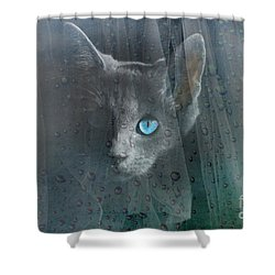 Shower Curtain featuring the photograph Kitty At The Window by Chris Armytage