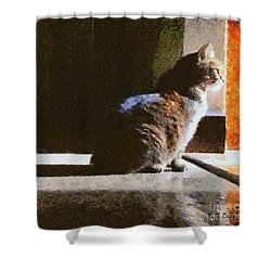 Kitty In The Light Shower Curtain by Elizabeth Coats