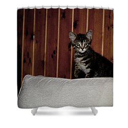 Shower Curtain featuring the photograph Kitty by Laura Melis