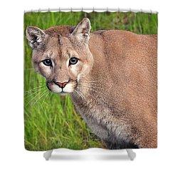 Kitty Look Shower Curtain