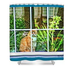 Shower Curtain featuring the photograph Kitty Reflections by Wendy McKennon