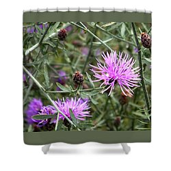 Knapweed Shower Curtain