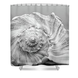 Shower Curtain featuring the photograph Knobbed Whelk by Benanne Stiens