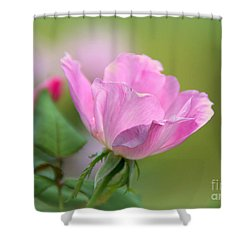 Shower Curtain featuring the photograph Knock Out by Lisa L Silva