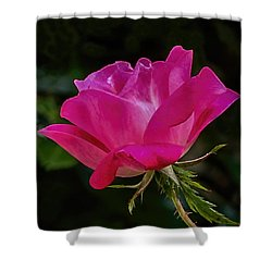 Knock-out Rose Shower Curtain