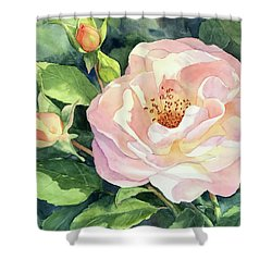 Knockout Rose And Buds Shower Curtain by Vikki Bouffard