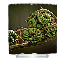Knotted Shower Curtain by Christopher Holmes