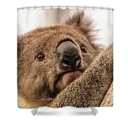 Koala 3 Shower Curtain