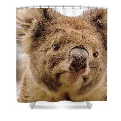 Koala 4 Shower Curtain by Werner Padarin
