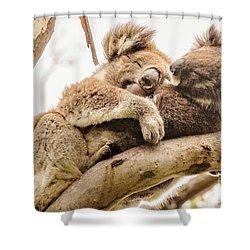 Koala 5 Shower Curtain by Werner Padarin