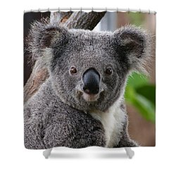 Koala Bear 7 Shower Curtain by Gary Crockett