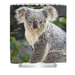 Koala Female Portrait Shower Curtain by Jamie Pham