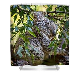 Koala Joey Shower Curtain by Jamie Pham