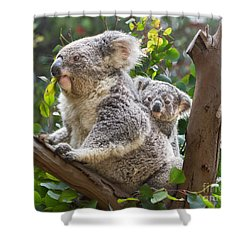 Koala Joey On Mom Shower Curtain