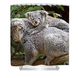 Koala Joey Piggy Back Shower Curtain by Jamie Pham