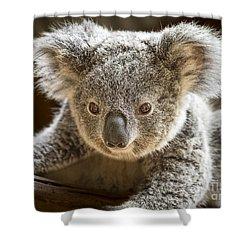 Koala Kid Shower Curtain by Jamie Pham