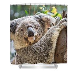 Koala On Tree Shower Curtain by Jamie Pham