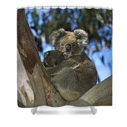 Koala Phascolarctos Cinereus Mother Shower Curtain by Konrad Wothe
