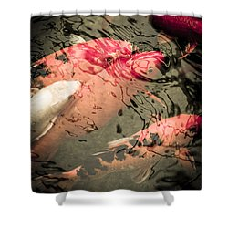 Koi Carps Shower Curtain by Perry Van Munster