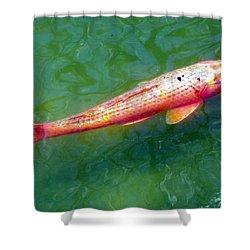 Koi Fish Shower Curtain by Joseph Frank Baraba