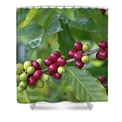 Kona Coffee Cherries Shower Curtain
