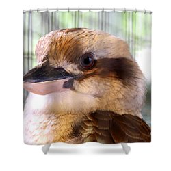 Kookabarra Shower Curtain
