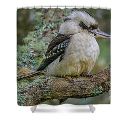 Kookaburra 4 Shower Curtain