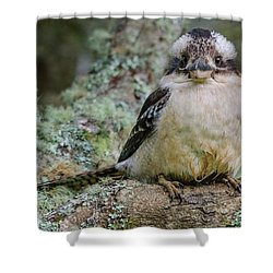 Kookaburra 3 Shower Curtain