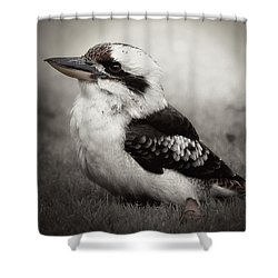 Kookaburra Beauty 01 Shower Curtain